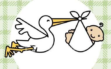 baby_stork