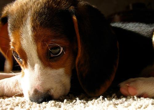puppyomg