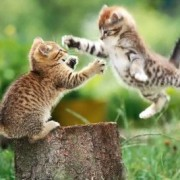 flying_cat_fight