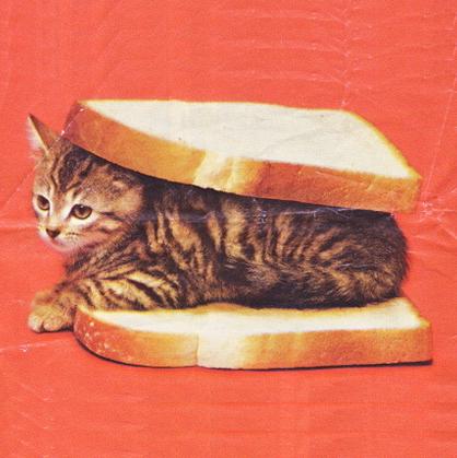 cat_sandwich_2