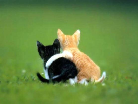 [Image: kitten_hug-1451.jpg]