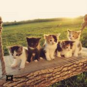 kitten-alone
