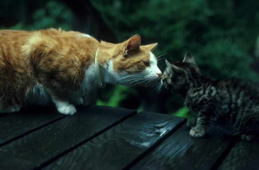 Two cats kissing