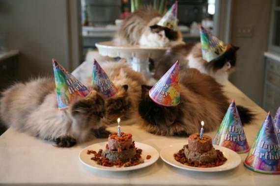 cat-birthday04.jpg