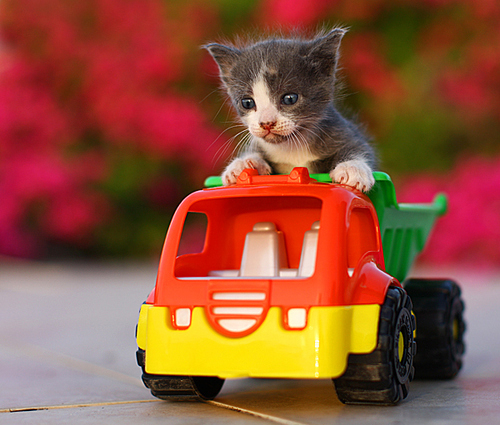 cat in a truck-1