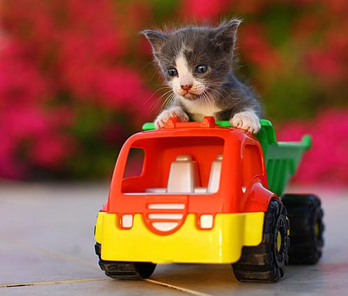 cat in a truck-1