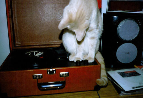 cat on a record player