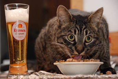 kitten cereal