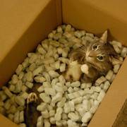 cat imagery representing 'glass cage of emotion,' but with cardboard and styrofoam