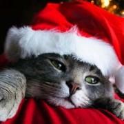 Santa-Cat_large