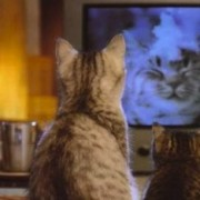 cat-watching-tv 2