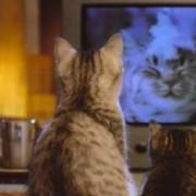 cat-watching-tv 2