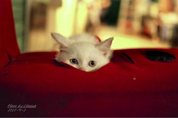 kitten alone