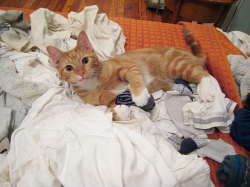 laundrycats2