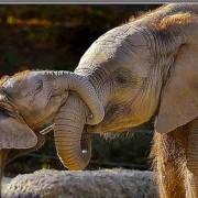 ElephantMamaandBabyKissing