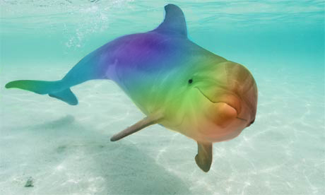 from Harlan dolphins gay symbol