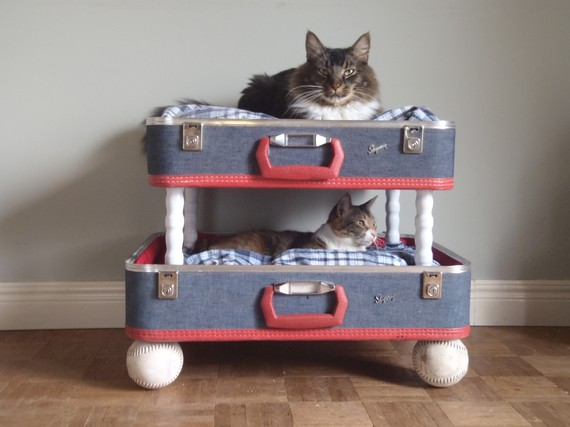 Cat bunk bed