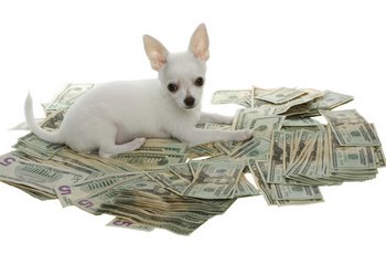 moneypup