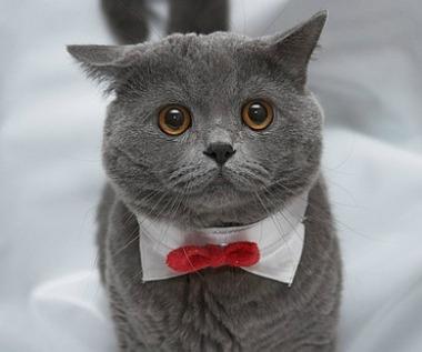 Cat Won T Wear Collar