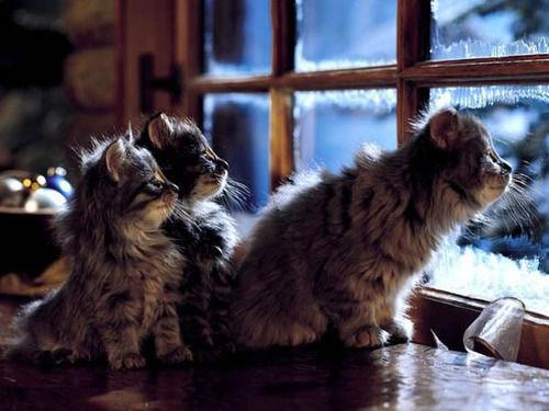 cats watching show