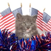 election kitty