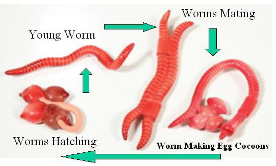 how to tell if you have worms