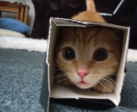 cat in a box feature