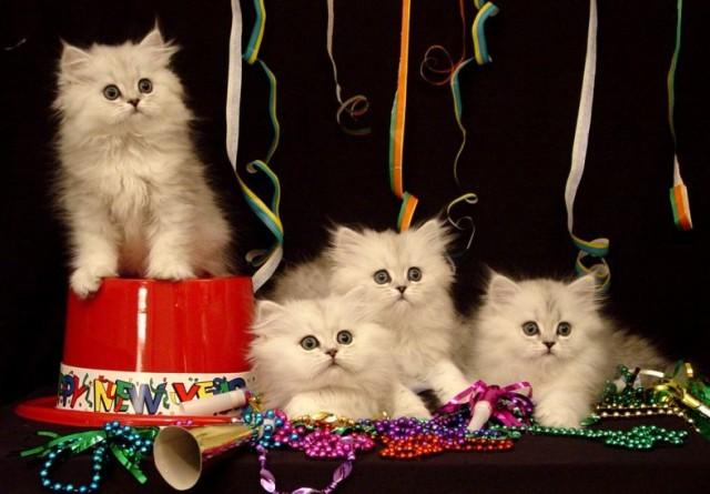 new-year-kitty-wallpaper