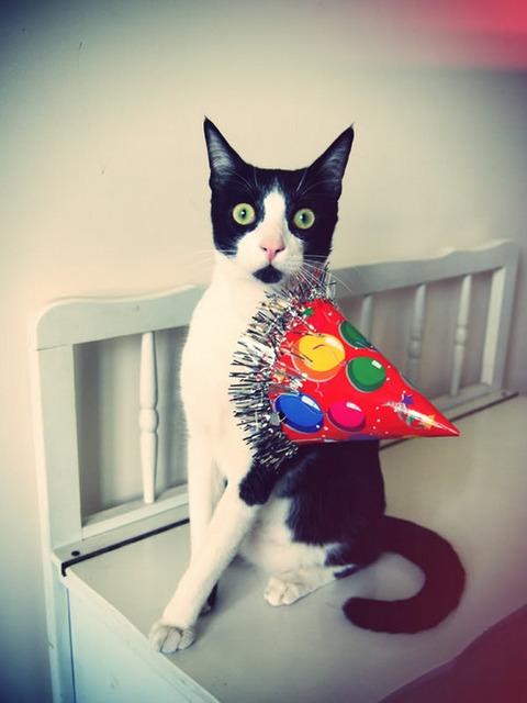 partyhatcat