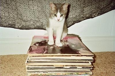 kitten on albums