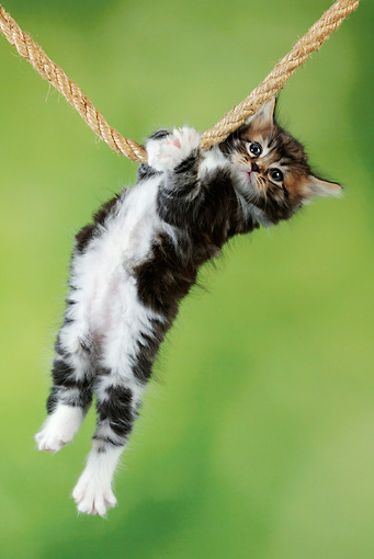 THIS WOULD BE A CATENARY IF NOT FOR THE CAT