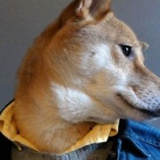 menswear dog feature