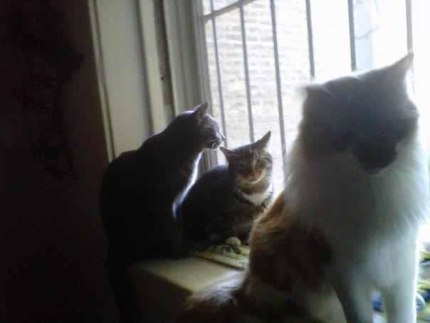 Sarah's Cats