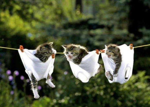 Kittens_in_pants
