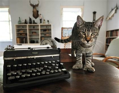 cat-with-typewriter