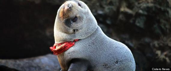 Seal Stuck In G-String