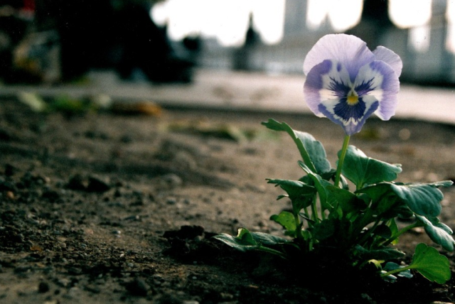 for david morley southbank london via the pansy project