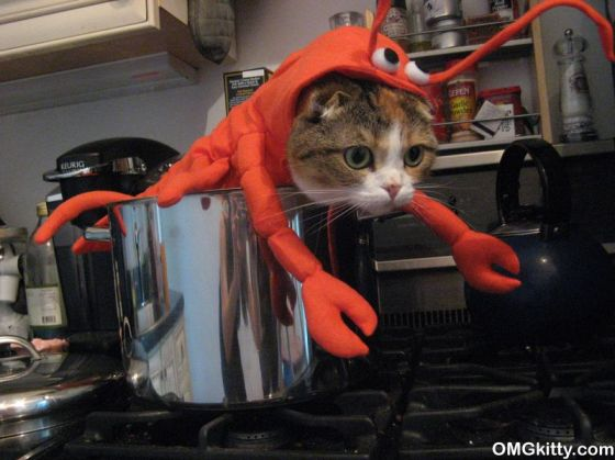 """DID YOU KNOW THAT IN LOBSTERS, THE CALCAREOUS APPARATUS, WHICH TRITURATES FOOD, IS ALSO CALLED THE """"LADY""""?"""