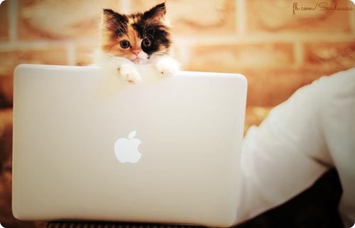 kittenlaptop