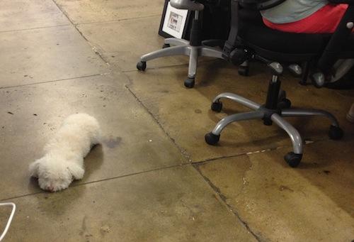 kimberly at work