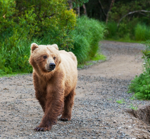 unrelated picture of bear via shutterstock
