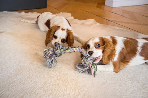 Using a double ended toy with a partner, via We Heart It
