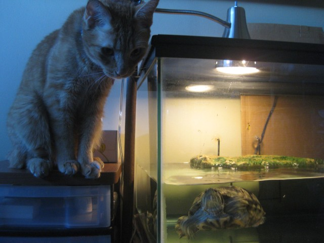 a cat and a reptile