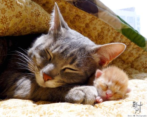 an example of an incredible mom, also the most adorable thing ever (via catmeow.com)