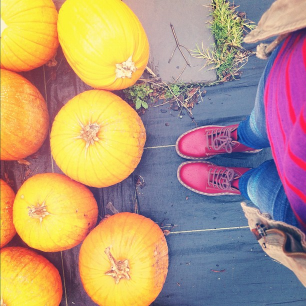 things you can't do in central florida: go pumpkin picking!