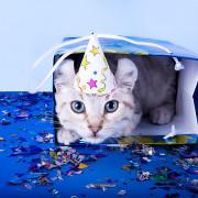 kitten-in-a-hat