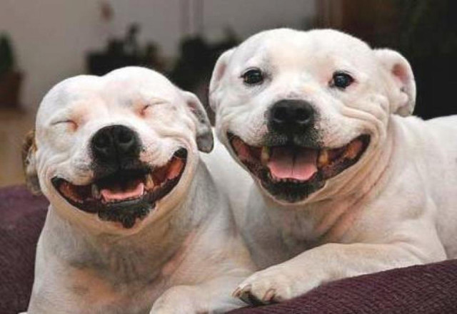 Happiest-Dogs-1