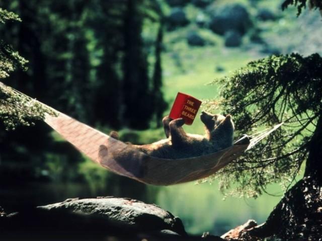 bear_reading