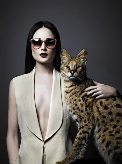 crazy-cat-lady-promo-image