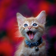 look how happy this cat is, you too could be this happy (via ....com)